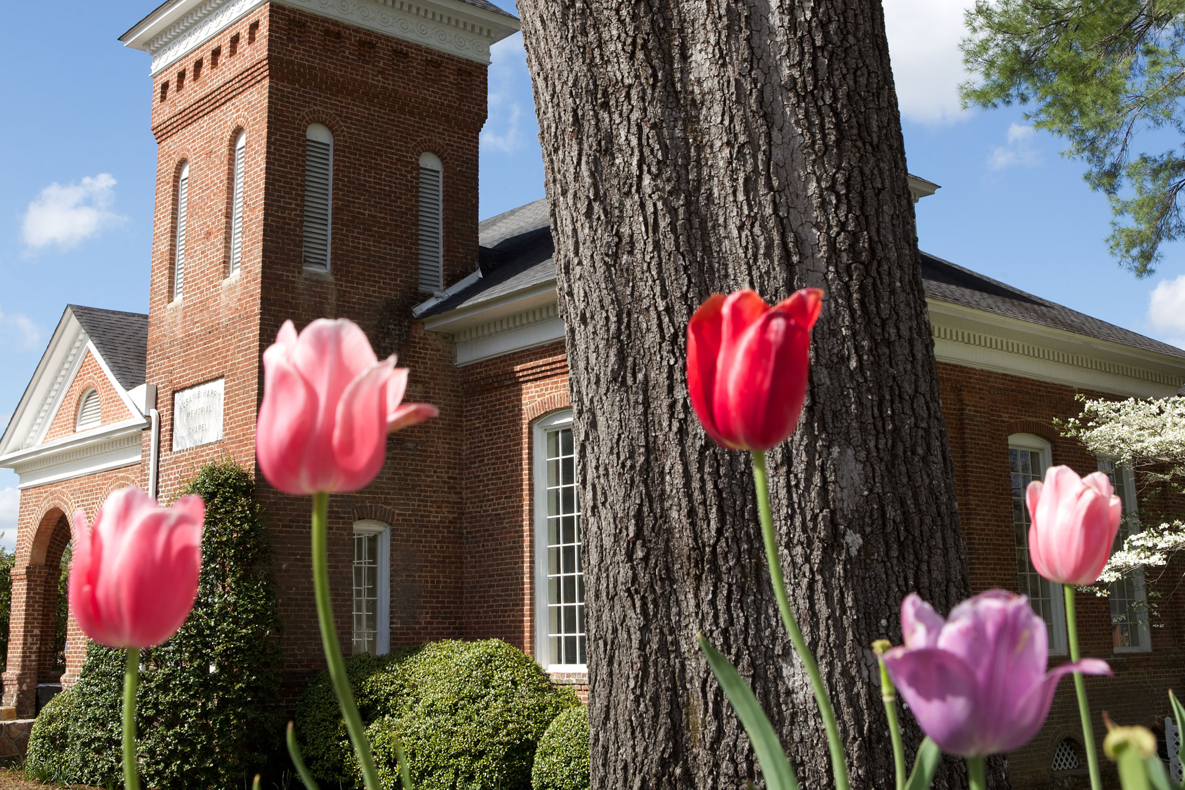 tulips in front of chapel