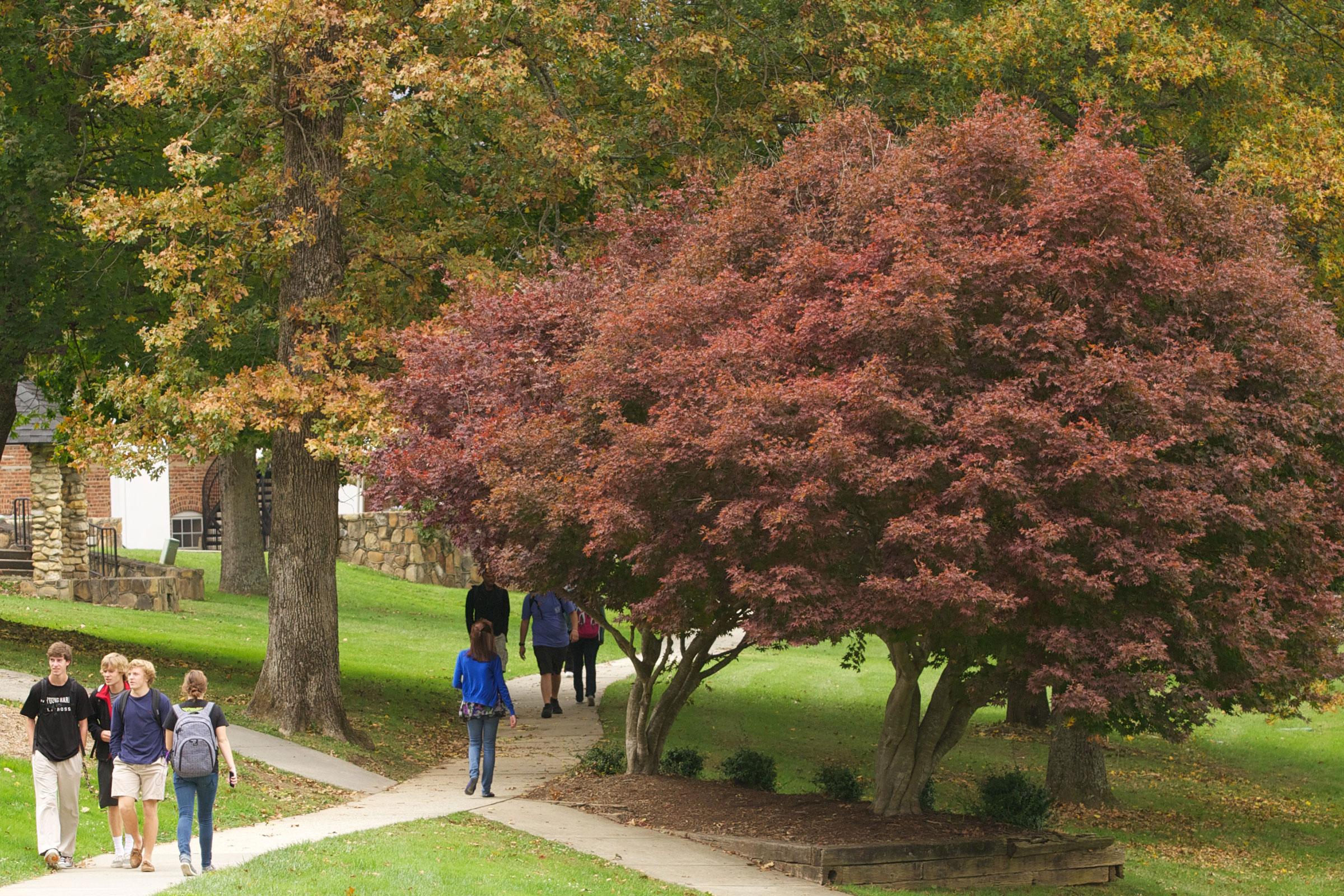 tree on campus lawn path