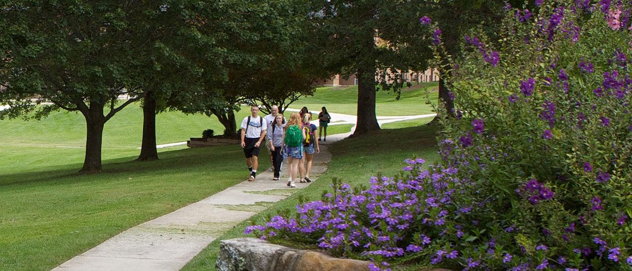 purple flowers along path