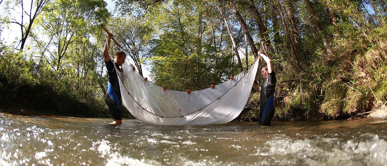 fish research in creek