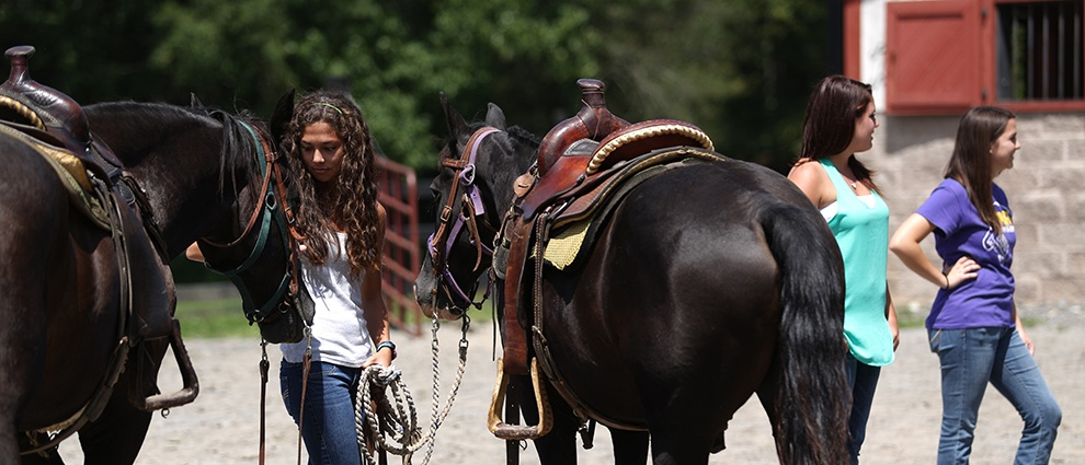 horse with trainer