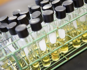 lab samples in test tubes